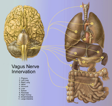 The vagus nerve, emotions and the difficulty with